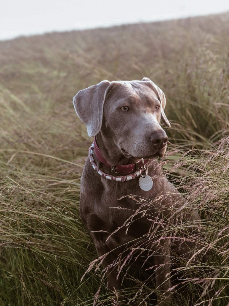 Boncuk auf einem Feld