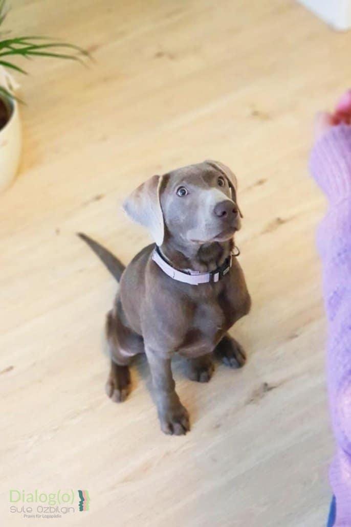 Therapiehund Boncuk